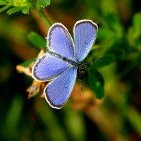 и опять про бабочек...37 :: Александр Прокудин