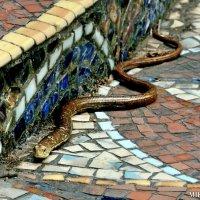 Змей :: Mikhail Irtyshskiy