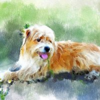 Акварельный портретик собачки :: Светлана Кузнецова