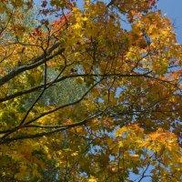 Листья осенние снова покругу... :: Владимир Павлов