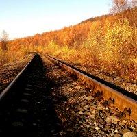 Дорога в осень. :: игорь кио