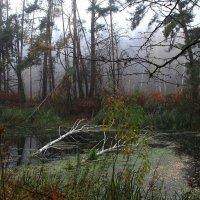 Ты в лес осенний иногда приди чтобы увидеть красоту. :: Volodymyr Shapoval VIS t