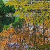 Сакура - отражение красоты :: олег свирский