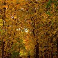 Осень в парке. :: Наталья Сазонова