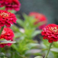 Последнее цветение :: Татьяна Лютаева