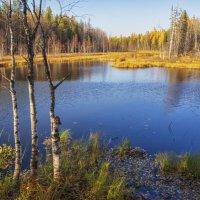 Лесное озеро :: Дмитрий Иванов