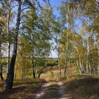 Осень. :: Victor Klyuchev
