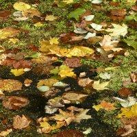 Осенние листья :: Лидия Бусурина