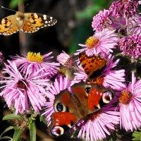 октябрьские бабочки  1 :: Александр Прокудин