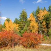 Осень кружится в танце легко в ярких красках одежды меняя... :: Наталья Димова