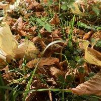 Краски Осени :: VADIM *****