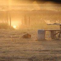 Утренний туман :: Валерий