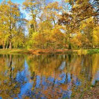 Золотое очарование октября... :: Sergey Gordoff