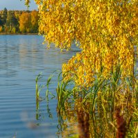 Золотая осень на берегу озера Ижбулат :: Михаил Пименов