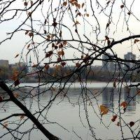Последние листья осени. :: веселов михаил
