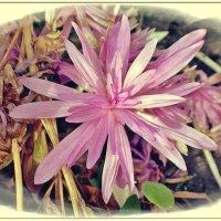 Осень в саду. (уДачная жизнь) :: muh5257