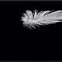 Пролетала птичка утром в тишине. Обронила пёрышко - знак какой то мне. * :: muh5257