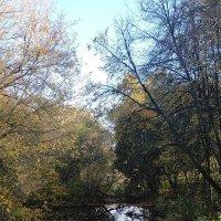 Есть в графском парке черный пруд... :: Yulia Raspopova