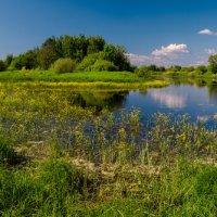 Краски лета :: Максим Мокрецов