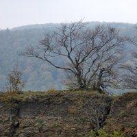 Дерево и скала :: Heinz Thorns