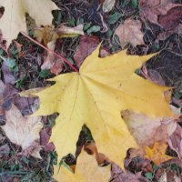 Осень.. :: Зинаида
