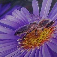 В поисках нектара :: irina Schwarzer
