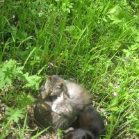 Коты :: Maikl Smit