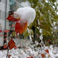 Первый снег :: Владимир Помазан