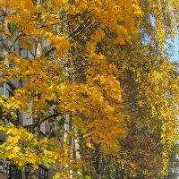 Время золотых листьев )) :: Ольга Елисеева
