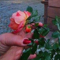 Красная роза - эмблема любви :: Борис