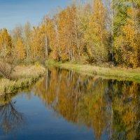 Золотая осень :: Светлана Винокурова