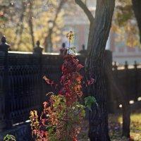 Золотая осень :: Олег Терёхин