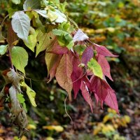 от зеленого до красного :: Heinz Thorns