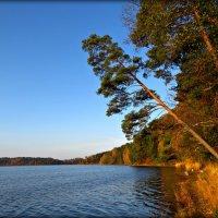 Осень на берегу озера :: Ольга Митрофанова