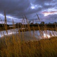 Высокие травы. :: Сергей Мартьяхин