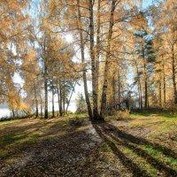 Осенний полдень :: Vladimbormotov