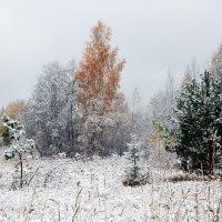 Зима к нам в гости приходила :: Юрий Пучков