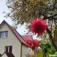 October garden :: silvestras gaiziunas gaiziunas