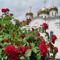 Лето :: Ольга Елисеева