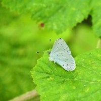 Бабочки 1 :: Дмитрий
