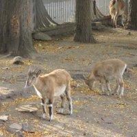 Октябрь в ростовском зоопарке :: Нина Бутко
