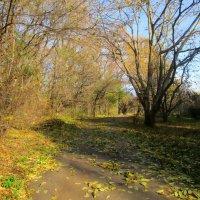 Ноябрьский пейзаж :: Ольга Довженко