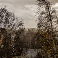 ветренный день ноября :: Петр Беляков