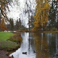 осень :: Валентина Папилова
