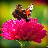 красота от природы :: Олег Лукьянов