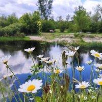 ромашковая река :: Катарина