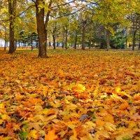 На ковре из желтых листьев... :: Alex ARt