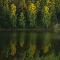 Над водой склоненые :: Shapiro Svetlana