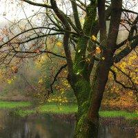 Осень :: Валерий Чернов