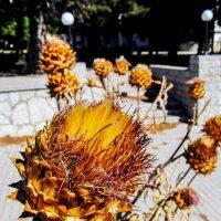 Растение :: east3 AZ